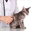 Ветеринарные клиники в Ипатово